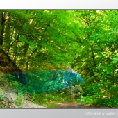 4 bazantarnia zdjecie las