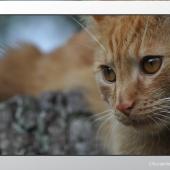 6 fotografia zwierzat zdjecie kota