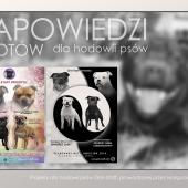 fotografie psy, zapowiedzi, projekty graficzne